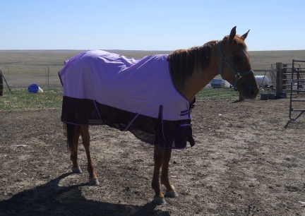 Lucius in his new Purple Fly Sheet 7 - 2012
