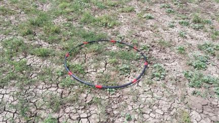 Horse Equine Hoop On The Ground 2014-08-27